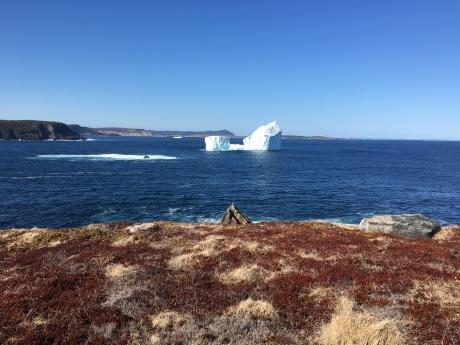Ferryland Iceberg - photo credit: Perla Hernandez