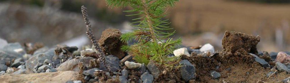 thegreenrock